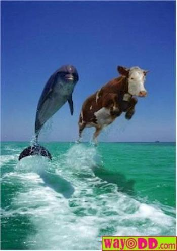 �������� ��� ���� - funny-pictures-cow-jumping-aqY.jpg